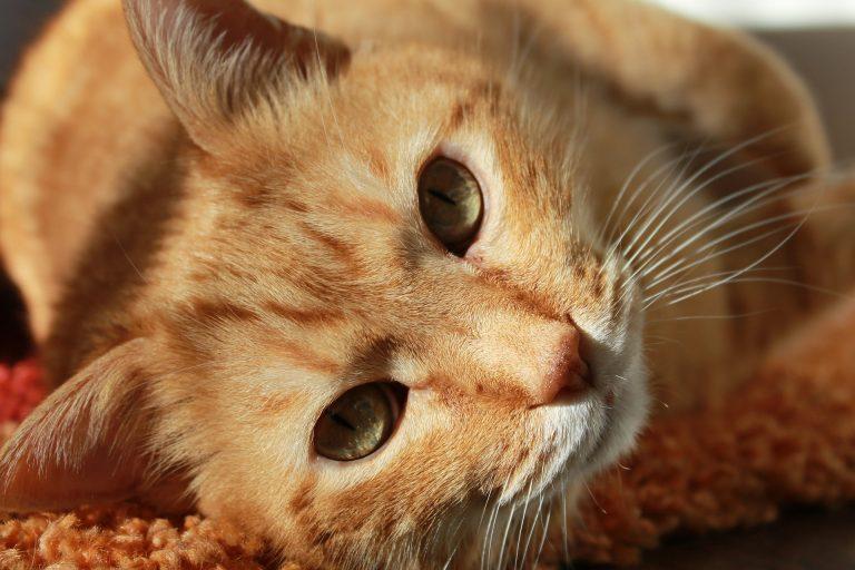 Happy Weltkatzentag