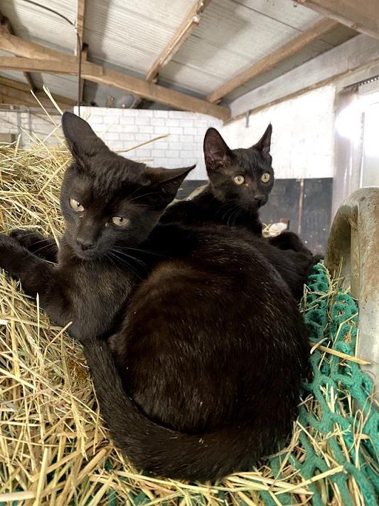 2 Katzen im Stroh